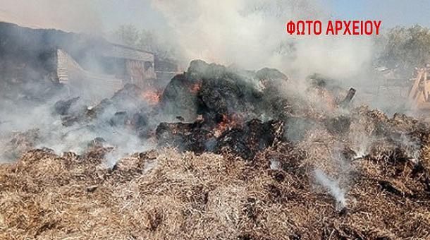 Κάηκε ολοσχερώς στάβλος με 90 αγελάδες στο Μουζάκι!!!!