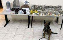 Συνελήφθησαν δύο άτομα στην ευρύτερη περιοχή της Καρδίτσας με 3 κιλά κάνναβης