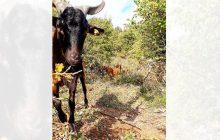 Ημερίδα κτηνοτρόφων αύριο Παρασκευή 22 Φεβρουαρίου 2019