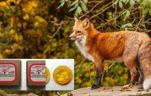 Ρίψη εμβολίων – δολωμάτων από αέρος στα πλαίσια αντιμετώπισης της Λύσσας