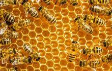 Ημερίδα με θέμα «Μέλισσες-επικονιαστές και άνθρωπος»