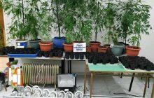 Σύλληψη 48χρονου για καλλιέργεια δενδρυλλίων κάνναβης με τη μέθοδο της υδροπονίας