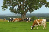 Αποζημιώσεις ύψους 1.813.719 ευρώ σε κτηνοτρόφους της Θεσσαλίας