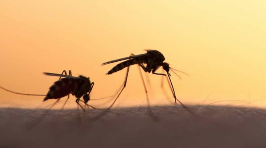 Οδηγίες για μέτρα πρόληψης και προστασίας από τα κουνούπια
