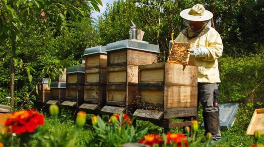Ιδιαίτερη προσοχή στο νοθευμένο μέλι - Τι πρέπει να γνωρίζετε