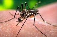 Δέκα νεκροί και 96 κρούσματα λοίμωξης από τον ιό του Δυτικού Νείλου