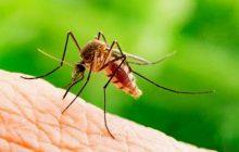 Κρούσματα του ιού του Δυτικού Νείλου και στη χώρα μας