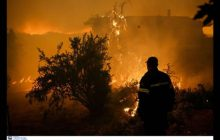 Ένας δασολόγος προτείνει: «Ιδανική λύση είναι η μείξη των δασών»-Ποιοι παράγοντες ευνοούν την επέκταση πυρκαγιών
