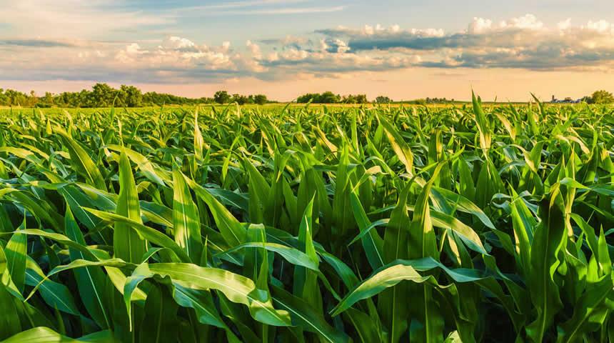 Η κλιματική αλλαγή προβλέπεται να μειώσει τη διαθεσιμότητα θρεπτικών ουσιών στα τρόφιμα