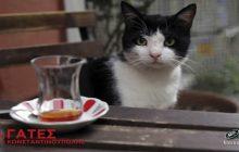 Αρχίζει η πιο όμορφη κινηματογραφική παρέα  Με τις υπέροχες «Γάτες της Κωνσταντινούπολης»