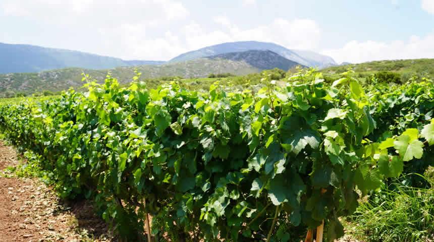Έκθεση με κρασιά της Κεντρικής Ελλάδας πραγματοποιήθηκε σήμερα Κυριακή στην Αθήνα