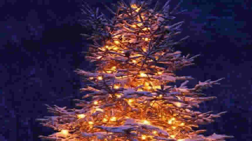 Άναμμα του Χριστουγεννιάτικου δέντρου στο Μουζάκι και έναρξη του