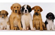 Χρηματοδότηση Δήμου Μουζακίου με 2.996,73 ευρώ για καταφύγια αδέσποτων ζώων συντροφιάς