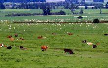 Νέες ποτίστρες σε κτηνοτροφικές περιοχές του Δήμου Πύλης κατασκευάζει η Περιφέρεια Θεσσαλίας
