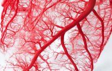 Πανδημία κορωνοϊού και καρδιαγγειακό σύστημα: εξελίξεις, καινοτομίες και προοπτικές