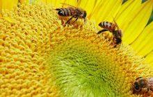 Το μήνυμα της Συμπροέδρου του Πράσινου Κινήματος για την Παγκόσμια Ημέρα Μέλισσας