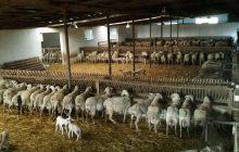 Παράταση στην αδειοδότηση κτηνοτροφικών εγκαταστάσεων