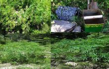 Εντοπίστηκε και νέα φυτεία με 736 δενδρύλλια κάνναβης στην Λίμνη Πλαστήρα