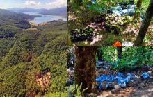 Εντοπίστηκαν δύο φυτείες κάνναβης σε δασώδη περιοχή της Λίμνης Πλαστήρα