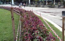 Νέες φυτεύσεις στον ανθώνα της πλατείας Πλαστήρα στην Καρδίτσα