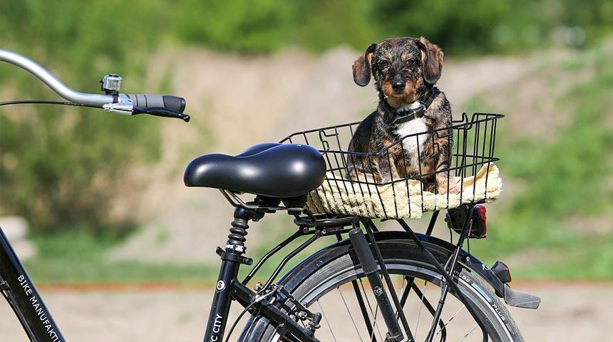 Ποδηλατώντας για τα αδέσποτα- Αναλυτικό πρόγραμμα