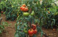 Τήρηση απαιτήσεων του Εκτελεστικού Κανονισμού για την διακίνηση φυτών προς φύτευση