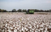 Ενημέρωση βαμβακοκαλλιεργητών για την αποτελεσματική προστασία των καλλιεργειών