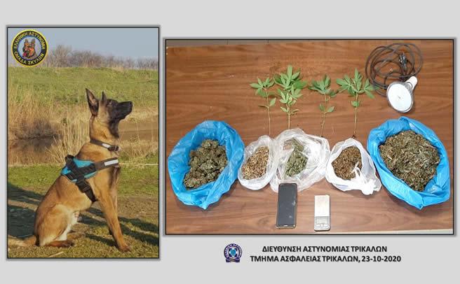 Συνελήφθη ένα άτομο στα Τρίκαλα, κατηγορούμενο για παραβάσεις του νόμου περί ναρκωτικών ουσιών