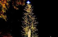 Τρίκαλα: Διαδικτυακά φέτος φωταγωγείται το υψηλότερο φυσικό χριστουγεννιάτικο δέντρο