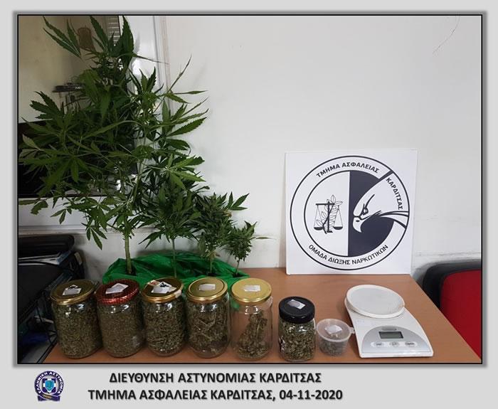 Καρδίτσα: Συνελήφθη με 230,6 γραμμάρια ακατέργαστης κάνναβης καθώς και 4 δενδρύλλια κάνναβης