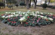 Με τα χρώματα των λουλουδιών του χειμώνα «ντύθηκε» το κέντρο της Καρδίτσας