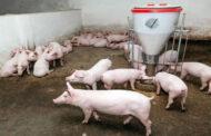 Υποδιεύθυνση Κτηνιατρικής ΠΕ Καρδίτσας: Δήλωση οικόσιτων χοίρων - Αφρικανική Πανώλη και μέτρα βιοασφάλειας