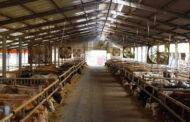 Λ. Μίχος: Οι κτηνοτρόφοι σε απόγνωση