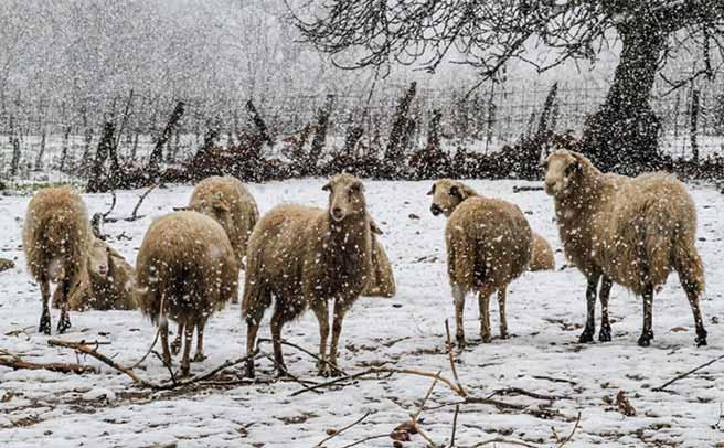 Π.Ε. Καρδίτσας: Ενημέρωση για την προστασία κτηνοτροφικών και πτηνοτροφικών μονάδων από την κακοκαιρία