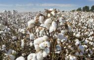 Σημαντική δωρεά προϊόντων θρέψης ύψους 80.000€ στους καλλιεργητές βαμβακιού του ΤΟΕΒ Ταυρωπού Καρδίτσας